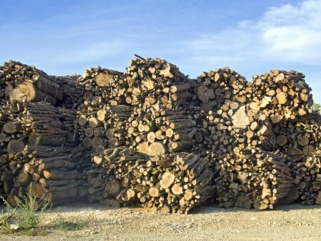 tree trunks stacked, background of blue sky photo