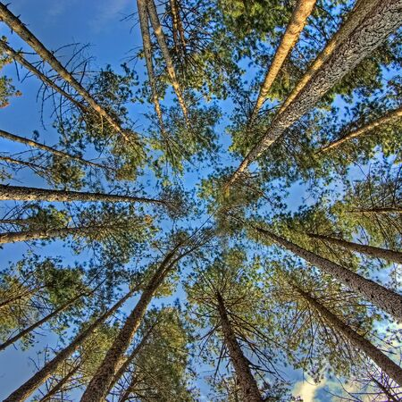 directly below: view of trees from below