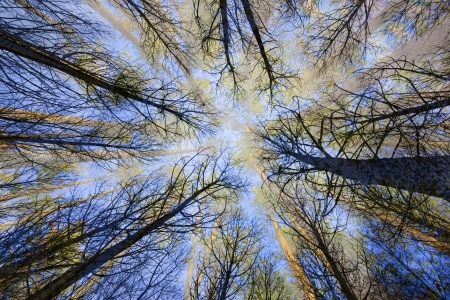 directly below: surreal trees in a forest   view from below
