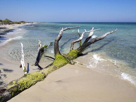 tree trunk on the beach on the seashore