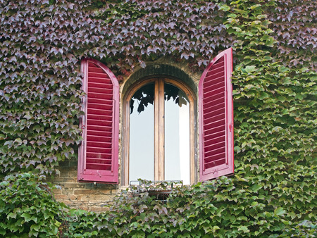 building window shutters open  covered with colorful  ivy