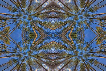symmetrical view of trees from below Stock Photo