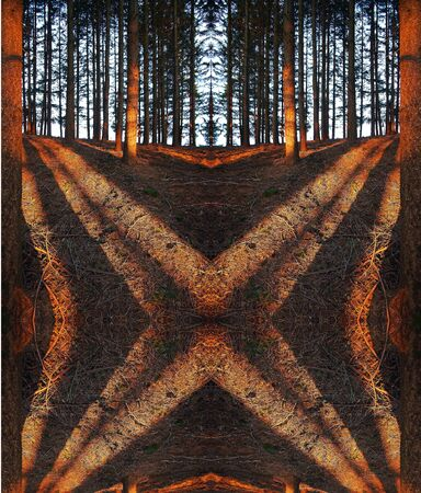 surreal symmetric red shadows in a forest at sunset Stock Photo