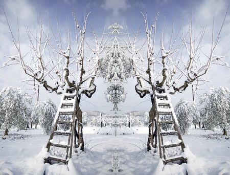 ladder covered with snow leaning against a tree Stock Photo