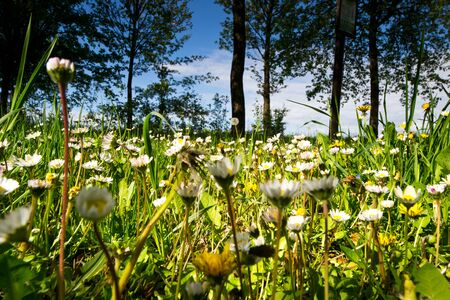Minesweeper,Spring meadow with many flowers Stock Photo - 13296445