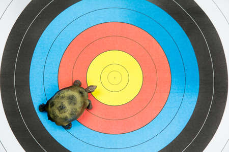 insist: turtle view from above on target background