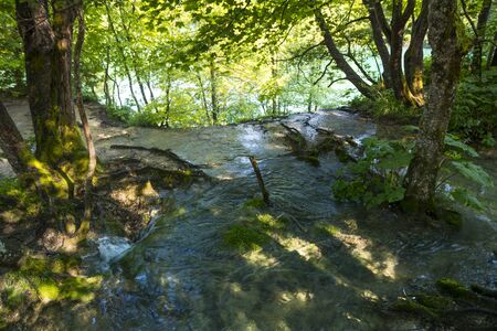 water anf tree in the national park of plitvice lakes in croatia on a sunny day