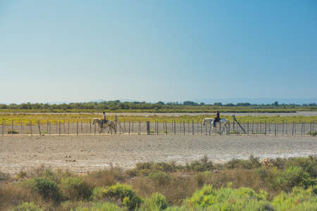 Camargue, France-august 14,2016people with horses: strolling in the park of the Camargue in France during a sunny day