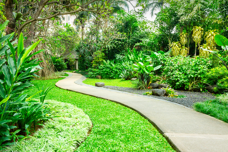 Beautiful green park with concrete winding path for pedestrians. The park is full of various tropical plants from the high trees to the low grass.