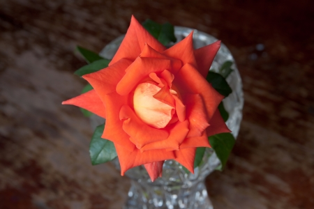 Coral and orange rose in a vase on vintage wooden  Stock Photo - 22844026