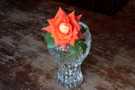 Coral and orange rose in a vase on vintage wooden  Stock Photo