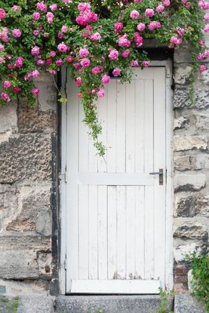 trailing: Trailing Roses on Garden Door