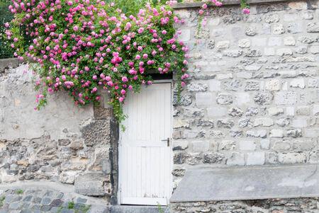trailing: Trailing Roses on Garden Door II