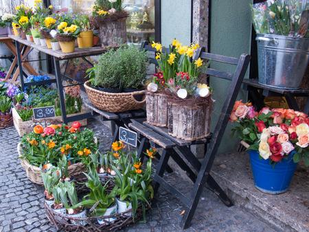 Flower Shop II photo