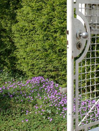 garden gate: Garden Gate in Spring