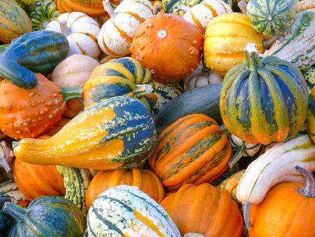Variety of Pumpkins II photo