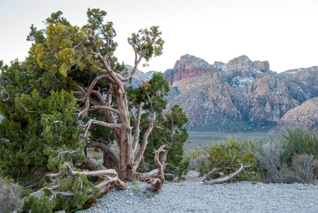 Juniper and view of Red Rock Valley Conservation Area III