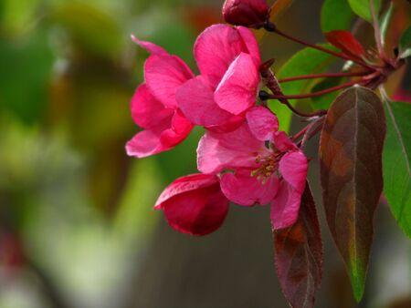 Tree Blossoms Stock Photo