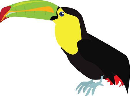 An illustration of a tropical bird called a Toucan.