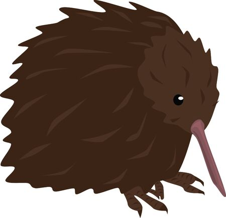 A Kiwi bird is native to New Zealand. Stock Vector - 15419683