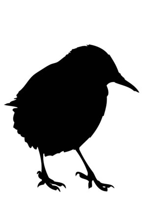 A silhouette of a European Starling