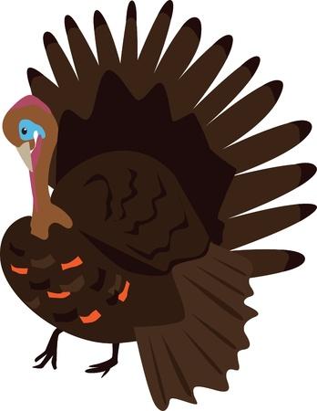 An illustration of a male turkey bird. Illustration