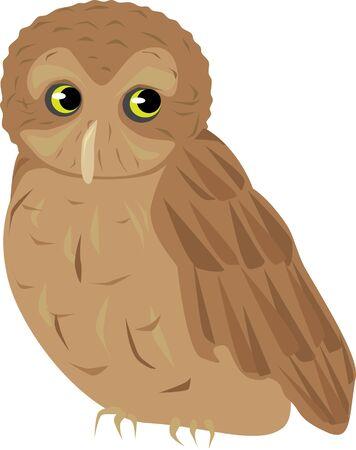 An illustration of a screech owl.