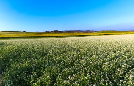 inner mongolia: Field in Inner Mongolia Stock Photo