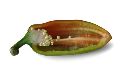Half of sweet bulgarian pepper with seed.  Mesh is used