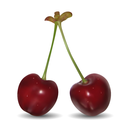 Pair of sweet cherries on white background. Mesh is used Stock Vector - 8768873