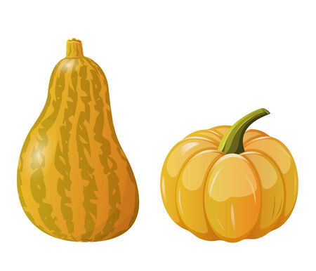 pedicle: Two pumpkins on white background