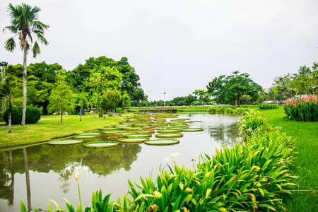 Public pond in the garden photo