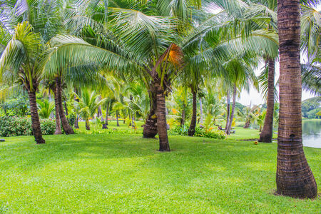 tropical leaves: Coconut orchards and green grass.