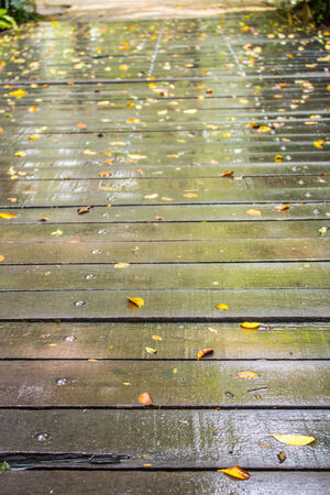 Wooden walkway in the park with rain. photo