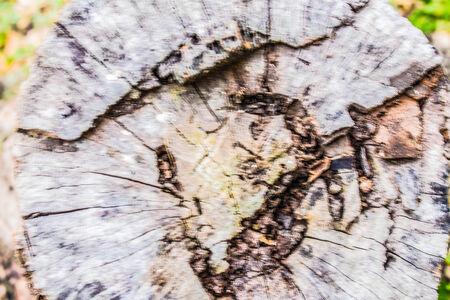 would: Stump that would take a blur. Stock Photo