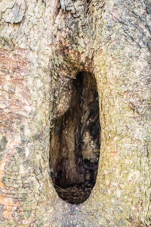 hollow tree: Surface of the hollow tree Stock Photo