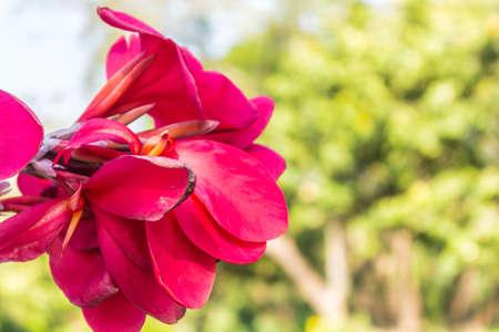 close range: Beautiful pink flowers visible at close range. Stock Photo