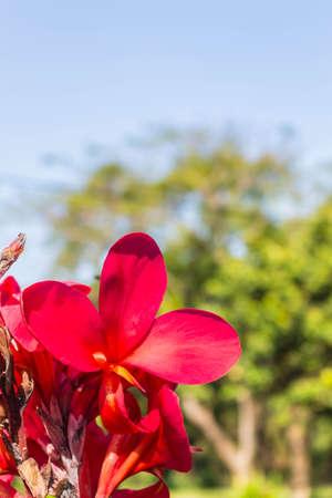 close range: Beautiful red flowers visible at close range.