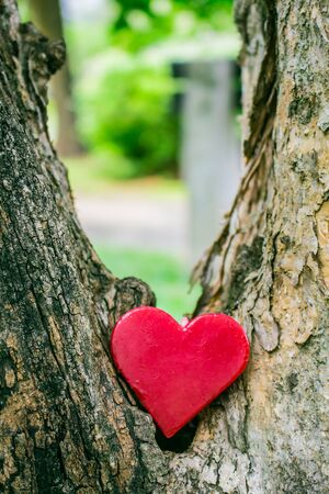 lonely heart: Lonely Heart of a tree gorges