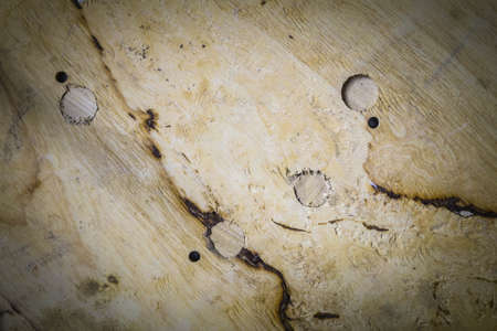 wood surface: The surface of the wood on background.