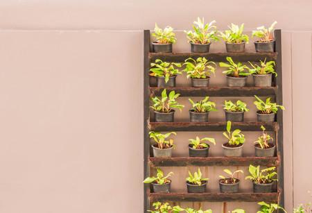 hojas de arbol: Las plantas que crecen en macetas decoradas.