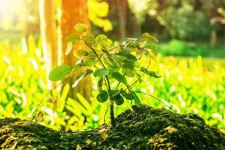 occur: Plants that occur in the wild. Stock Photo