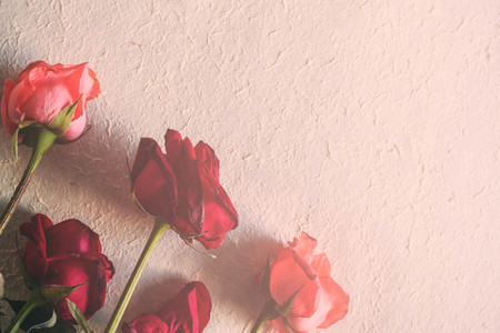 Roses wither on the white paper. Stock Photo