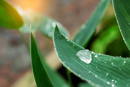 water drops on leaves with nature in rainy season stock photo