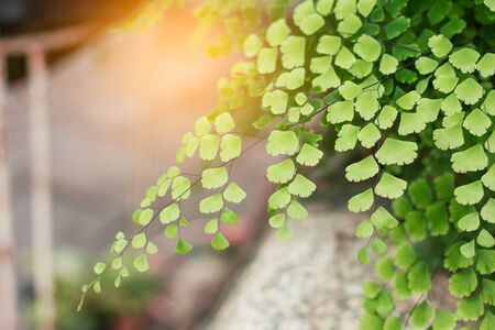 Ornamental with sunlight in the garden. Stock Photo