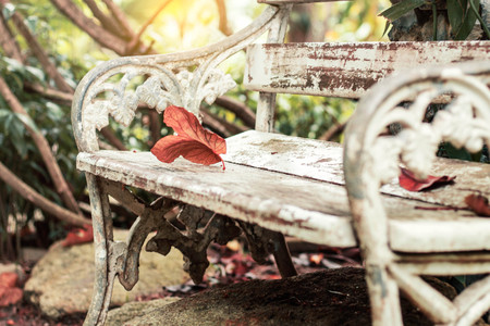 Dry leaves on old chairs in the park. Stock Photo