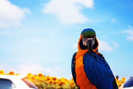 Colorful of birds with the blue sky.