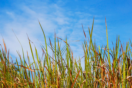 Leaves grass on the field with the blue sky.