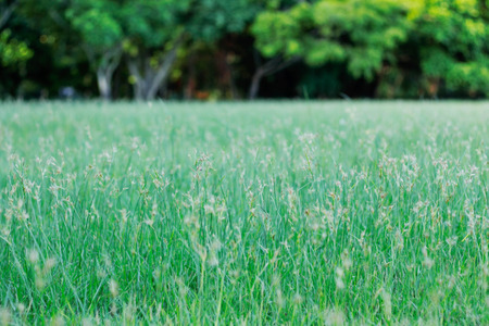 Grassy flowers on meadow and refreshing in the park. Stock Photo