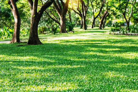 Lawn and trees with refreshing in the park. Stock Photo